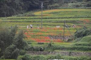 日本の原風景明日香村 (2)