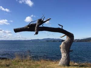 気仙沼の龍の松